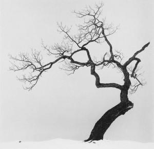 Juodas medis žiemą